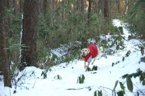 もののけの森へ雪山トレイル8