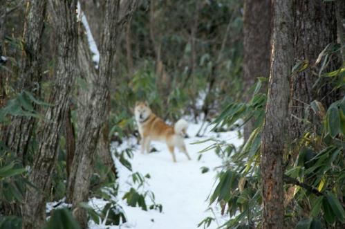 もののけの森へ雪山トレイル9