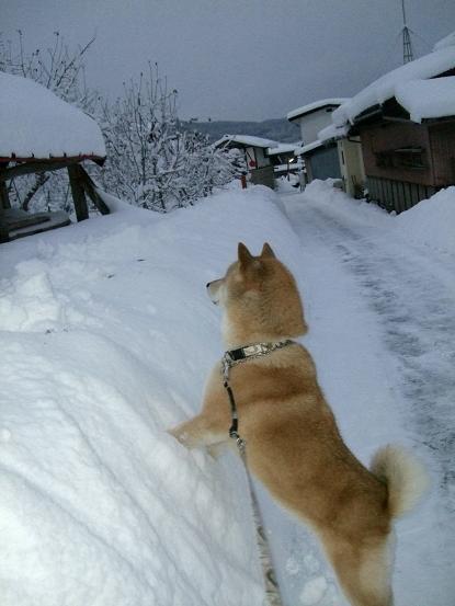 寒波到来9