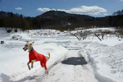 2月らしい気候15