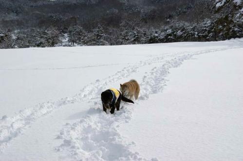 雪国育ち11