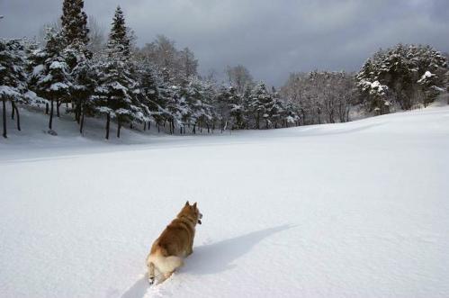 雪国育ち12