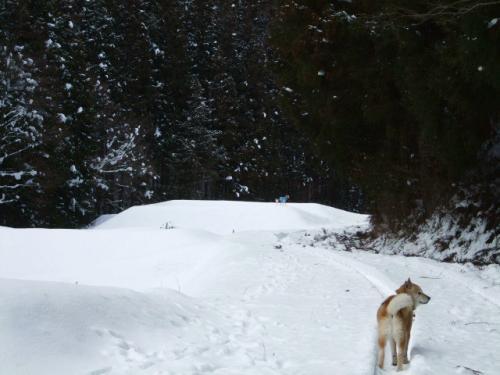 雪国育ち2