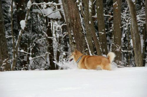 雪国育ち5