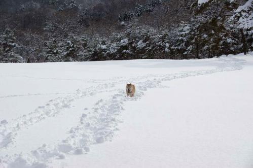 雪国育ち9