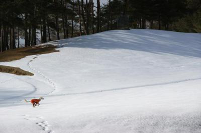 絶好調な雪山トレッキング14