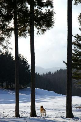 絶好調な雪山トレッキング19