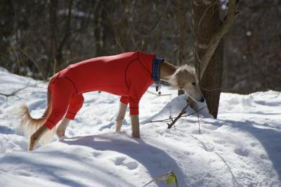 絶好調な雪山トレッキング1