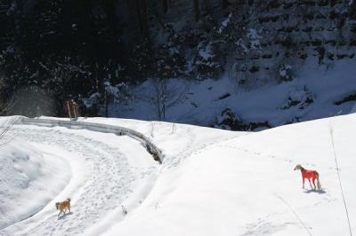 絶好調な雪山トレッキング4