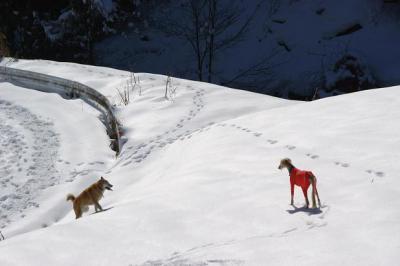 絶好調な雪山トレッキング5