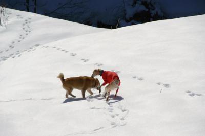 絶好調な雪山トレッキング6