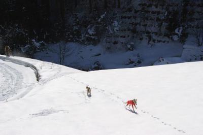 絶好調な雪山トレッキング7