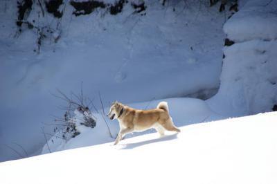 絶好調な雪山トレッキング9