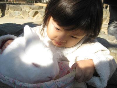 ウサギ見つめる茜