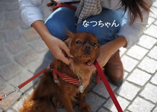 DSC_1244-キャバリ男サス家ブログ用(ルビーちゃん①)