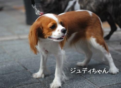 DSC_1264-キャバリ男サス家ブログ用(???①)