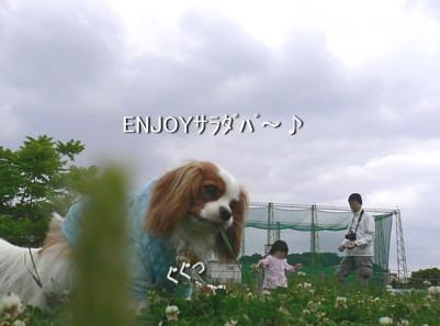 P1150007.jpg