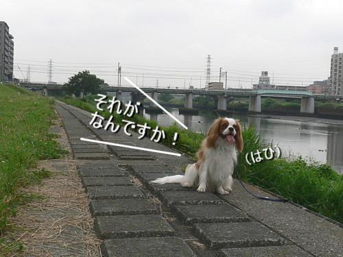 P1150625.jpg