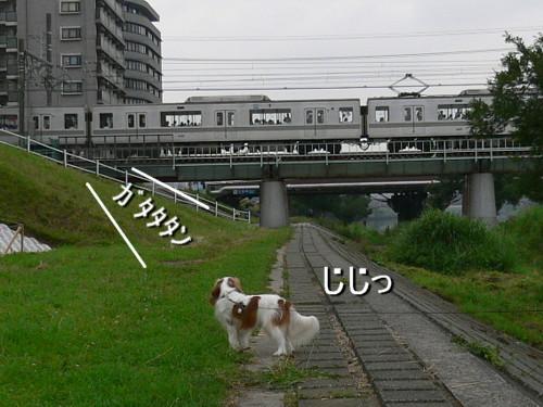 P1150632.jpg