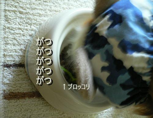 P1150788.jpg
