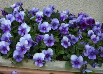 近所もよく見ると綺麗な花が