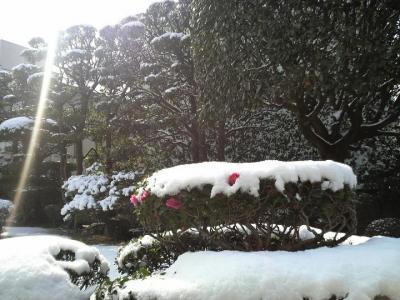 雪化粧@叶宅庭先。