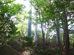 鎌ヶ岳から下山