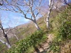 平瀬道から御前ヶ峰♪