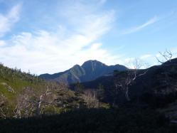 鳥倉林道から小河内岳♪