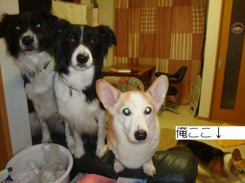 菫コ_convert_20101229123529