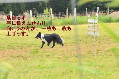 DSC_9250_20110522224608.jpg