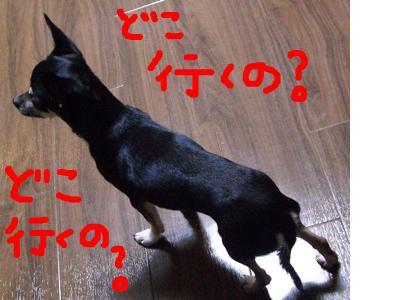 snap_denmami_2009126123315.jpg