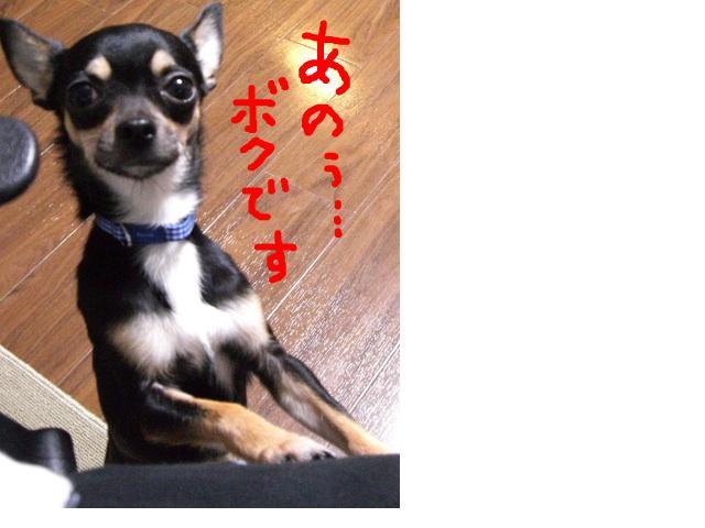 snap_denmami_200912612483.jpg