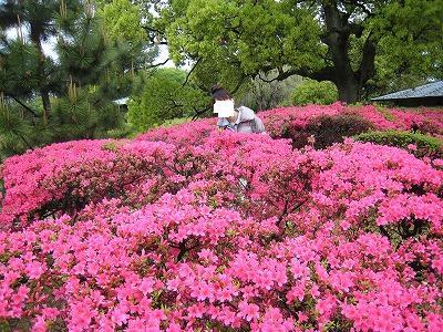 名古屋城09