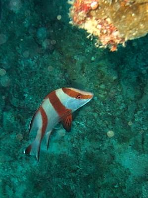 センネンダイ カケロマ島