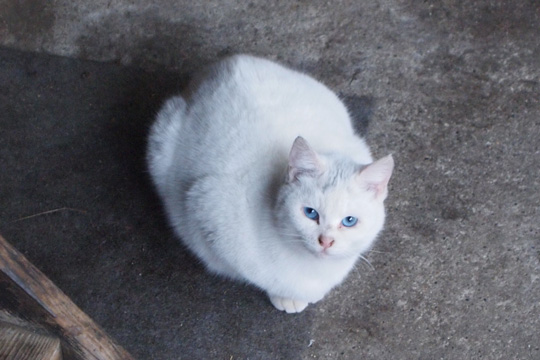 20100111_cat.jpg