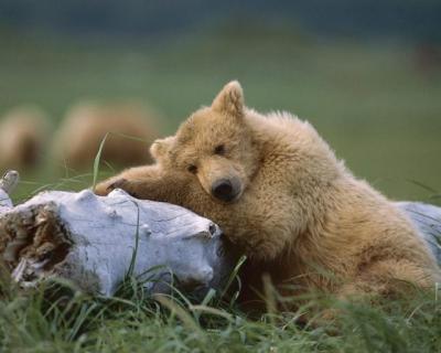 teddy_bears_640_41_convert_20101125165232.jpg