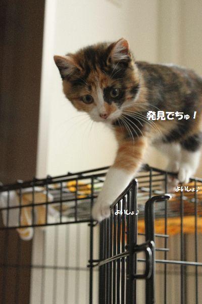 IMG_0457_20101214111337.jpg