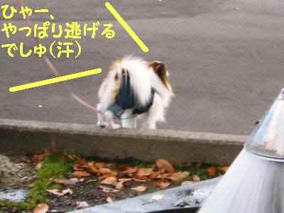 画像 20091122 022-