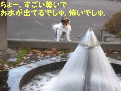 画像 20091122 020-2