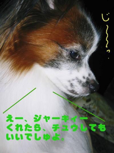 20091201007-1.jpg