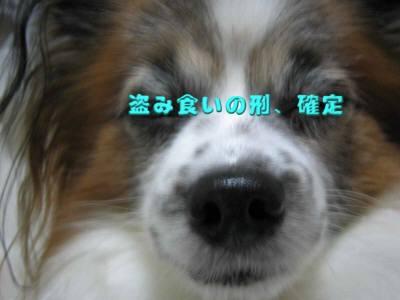 20091203007-1.jpg