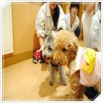 smileDSC_0071_20091112144548.jpg