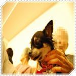 smileDSC_0091_20091112144654.jpg