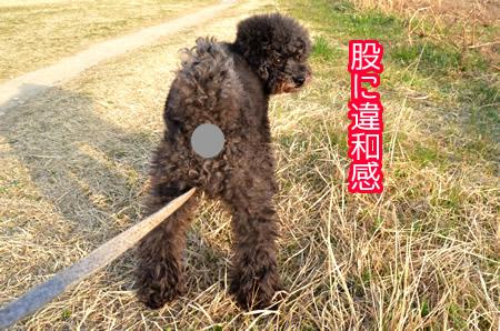 2_20130318000610.jpg