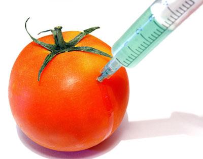 gmo-tomato.jpg
