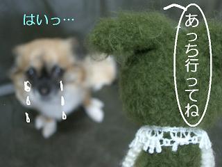 2.2011.05.25.あみちゃんvsポチ 022 blog