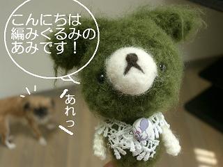 2.2011.05.25.あみちゃんvsポチ 010 blog