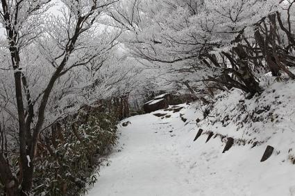 樹氷のカーテン