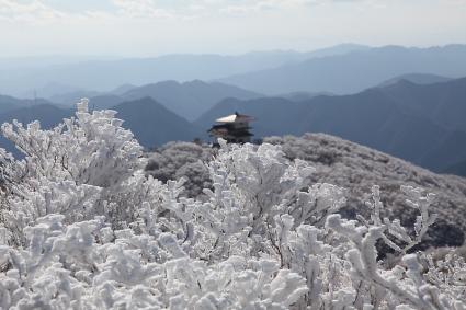 望湖台付近のダマ樹氷